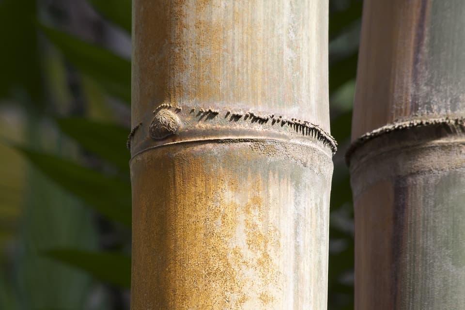 Parquet Bois Dur Ecologique : Plancher bois à vendre fabricant parquet bambou et chêne